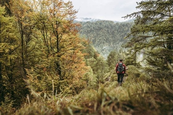 Waldaussicht von Etappe 2