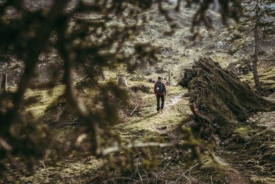 Waldbild von Etappe 11